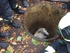 Kůň spadnul do přibližně tři metry hluboké šachty.