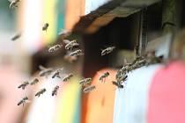 Českobudějovičtí včelaři otevírají nový kurz pro začínající včelaře, Včelařem na zkoušku.