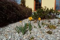 U Jankova už příroda dosvědčuje, že jaro začalo.