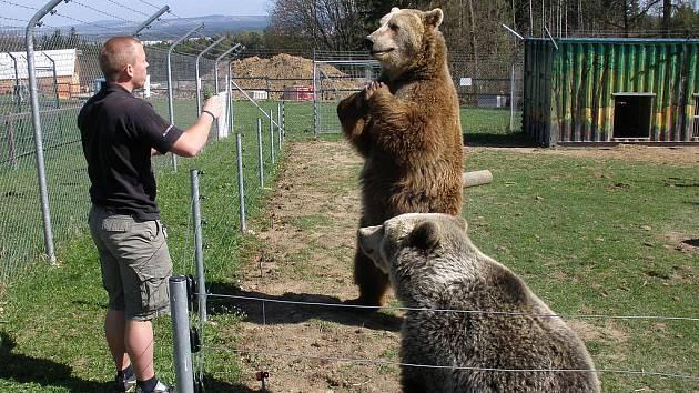 Také medvědi dostanou chuť na zelené.