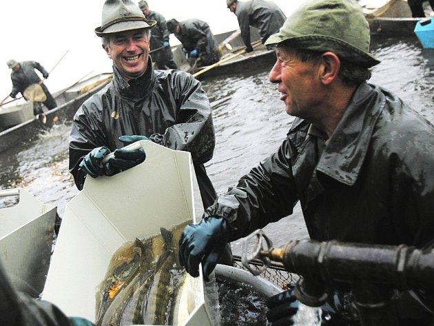 Téměř tisíc metráků kaprů, a čtyři sta metráků vedlejší ryby, candátů, štik, amurů a tolstolobiků chtějí v průběhu čtyř dní třeboňští rybáři vylovit z největšího českého rybníka Rožmberka.