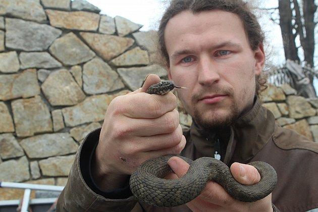 Na snímku pracovník ZOO Ohrada Pavel Kossel s užovkou podplamatou.