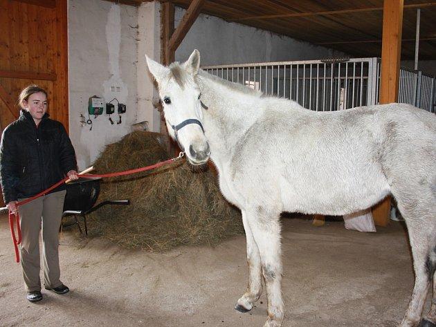 Ošetřovatelka Petra Veškrnová s kobylou, která byla údajně týrána. Nyní získala nový domov na jihu Čech.