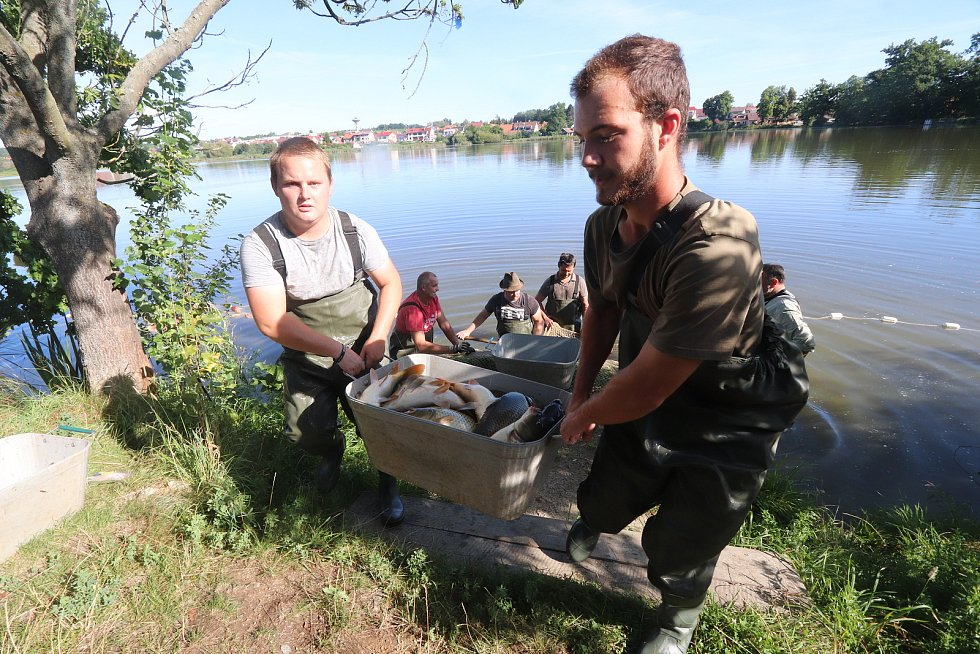 Letní odlov rybníka v Šindlových dvorech. Rybáři z českobudějovického střediska odlovili téměř tři metráky kaprů.