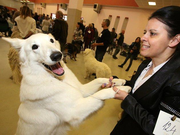 Na českobudějovickém Výstavišti se to hemžilo psy všech velikostí a ras
