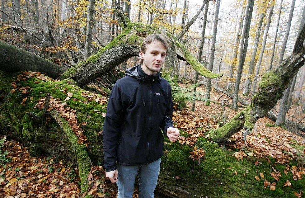 Žofínský prales v Novohradských horách je nejstarší ve střední Evropě. Po orkánu Kyril ale pětina stromů popadala a teď v něm řádí kůrovec. Na snímku botanik Petr Lepší u jednoho ze stromů starých 400 let.