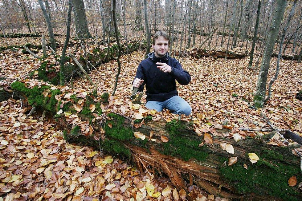 Žofínský prales v Novohradských horách je nejstarší ve střední Evropě. Po orkánu Kyril ale pětina stromů popadala a teď v něm řádí kůrovec. Na snímku botanik Petr Lepší z CHKO Blanský les.
