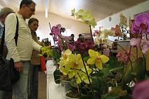 Výstava orchidejí v Homolích.