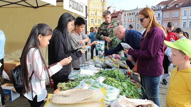 Sobotu můžete v Českých Budějovicích prožít na festivalu Ahoj Viet Nam a odejdete plni skvělých vietnamských jídel, kulturních zážitků a informací o této zemi.