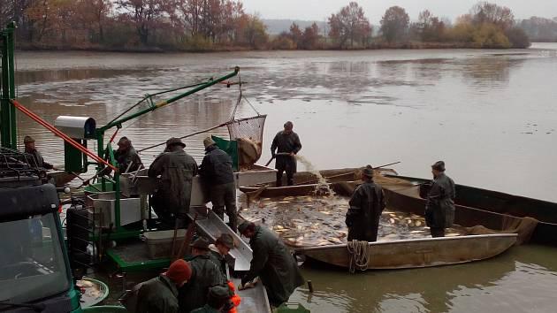 V hlavní rybářské sezóně přišla řada ve středu 13. listopadu řada i na výlov rybníku Dubeňák u Dubného na Českobudějovicku.