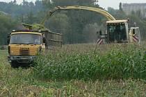 Sotva skončily dožínkové slavnosti, které byly symbolickým završením sklizně obilí, vyrazili zemědělci znovu do polí. Tentokrát na kukuřici, která se sklízí buď na senáž,  nebo na zrno, které ve formě šrotu vylepšuje krmné dávky zvířat.