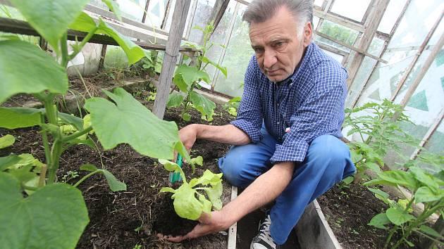 Práce na zahrádce v Dobré Vodě u Českých Budějovic. Na snímku je Jiří Moudrý, který ošetřuje a přesazuje rostliny do venkovního areálu.