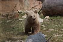 Bílý dráp v zoologické zahradě Ohrada