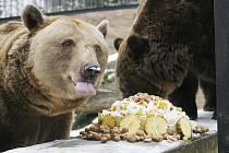 Zoo Ohrada v Hluboké nad Vltavou nad  má v současné době dva medvědy hnědé. Ti jsou však již poměrně staří, a proto se zřejmě nebudou stěhovat do nové expozice velkých šelem.