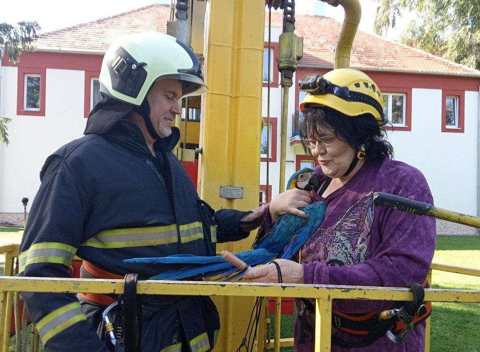 Osádka automobilové plošiny profesionálních hasičů ze strakonické stanice v úterý 15. září v areálu léčebny ve Lnářích chytala vzácného papouška.