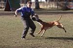 Únorový závod prověřil psy v obraně a poslušnosti