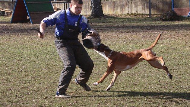 Obrazem: Únorový závod prověřil psy v obraně a poslušnosti