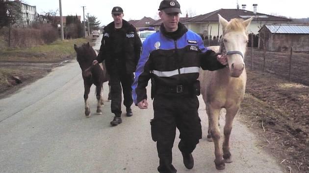 Policisté vracejí  oba čtyřnohé běžence domů.