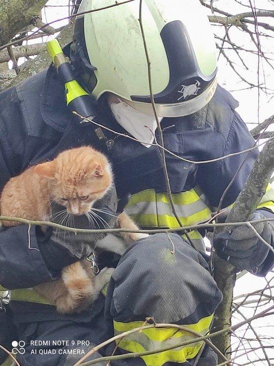 Záchrana kočky ze stromu.