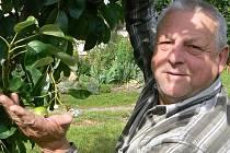 Raritou se u svého domu v Hrůtově nedaleko Lišova pyšní místní zahrádkář Jan Pinc. Hrušeň, kterou pěstuje, letos vykvetla už podruhé. Hrušeň přitom už začala také plodit.
