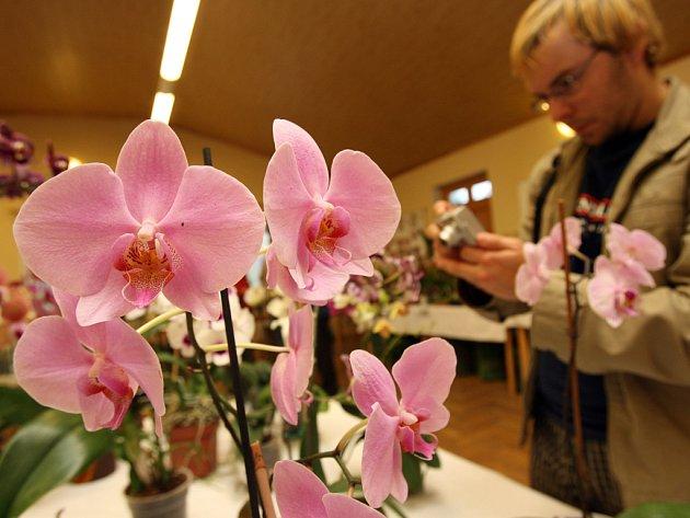 Jedenáctý ročník výstavy exotické fauny a flóry v sále hasičské zbrojnice v Homolích poutá právem pozornost.