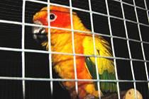 Výstava exotického ptactva v Plané nadchne chovatele i laiky.