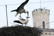 Více než šestatřicet let sídlí čápi na komíně bývalé kotelny zámeckého zahradnictví v Hluboké nad Vltavou. Letos první z nich – samec přiletěl v sobotu 26. března a samička dva dny poté.