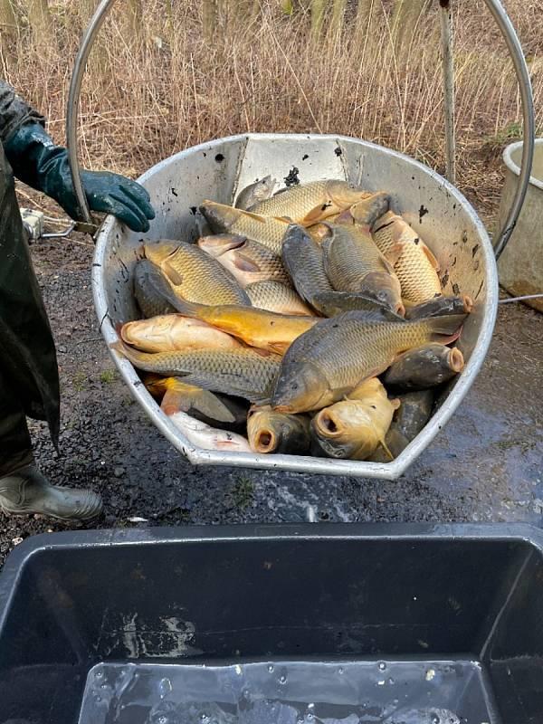 Obyvatelé jižních Čech mají rádi také čerstvé ryby. Sladkovodní nakupují je z lokálních zdrojů, mořské si nechávají dovážet.