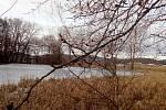 Pozdrav jara u rybníčku nedaleko Holašovic.