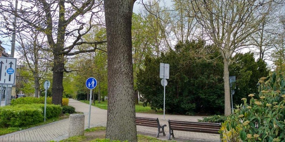 Kvetoucí stromy v regionu se letos o něco zpozdily oproti loňsku. Ale bylo alespoň dost rozkvetlých třešní na 1. máje.