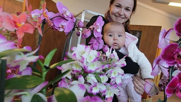 Výstava orchidejí, bromelií a cizokrajného ptactva v českobudějovickém Metropolu.