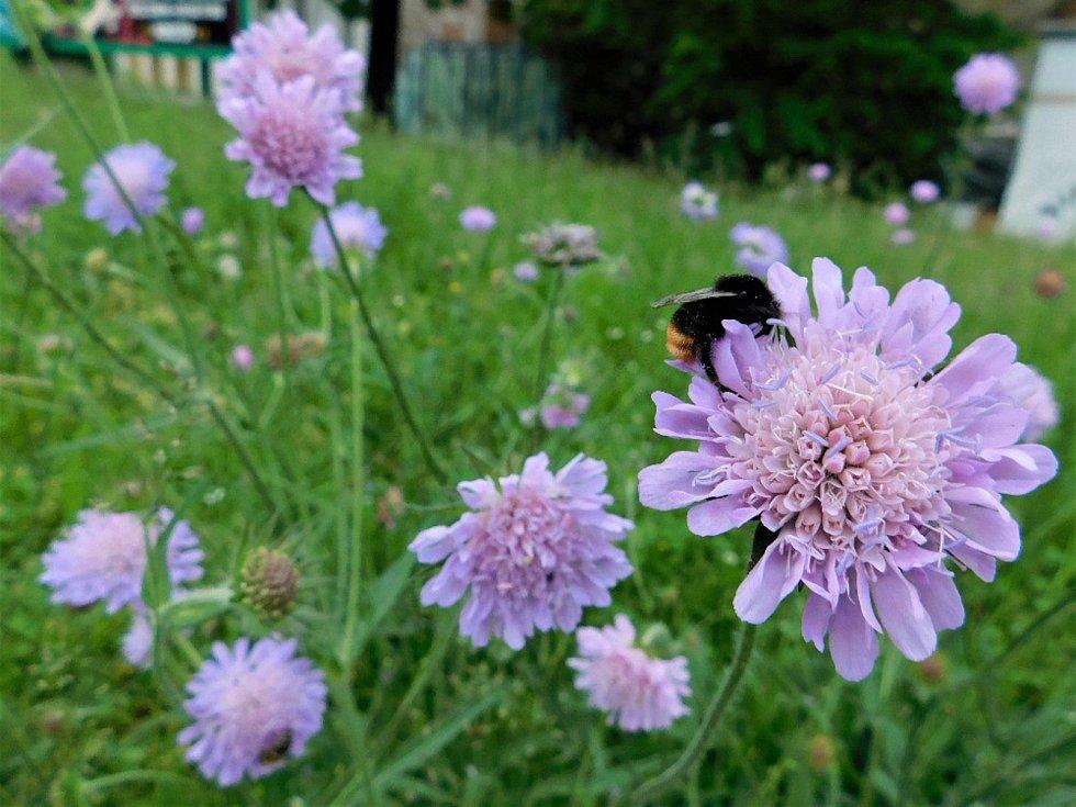 V Českých Budějovicích se některé trávníky nesečou, aby poskytly útočiště hmyzu. Na snímku plocha u křižovatky poblíž Výstaviště ČB.
