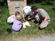Odborníci letos na Českobudějovicku zkontrolovali 45 čapích hnízd a okroužkovali 18 mláďat.