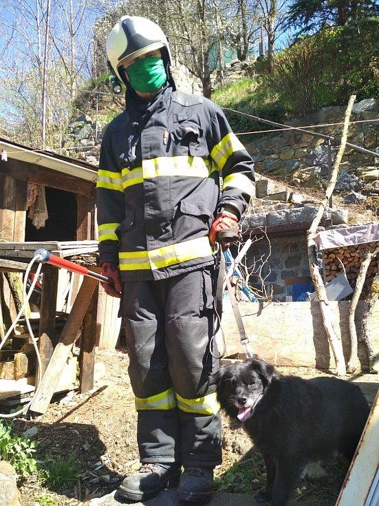 Psíka uvízlého v hranici dřeva v Táboře v ulici U Lázní vyprošťovala místní profesionální jednotka 20. dubna.