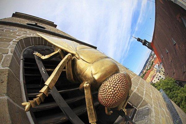 Umění ve městě je název výstavy soch, které zaplnily centrum Českých Budějovic. Na snímku třímetrová zlatá moucha, kterou na Černou věž umístil sochař Michal Trpák.