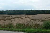 Polehlé obilí nedaleko Plavu.