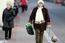 Nová vyhláška zpřísní pohyb psů ve městě.