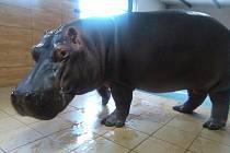 HROCH je jedním ze zvířat, jehož krmení můžete příští týden vidět v zoo Dvorec.