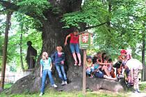 Na necelých sedm set let se odhaduje stáří římovské lípy, finalistky ankety Strom roku 2008. Věkovitý velikán Často poskytuje posezení i školákům při výletech.