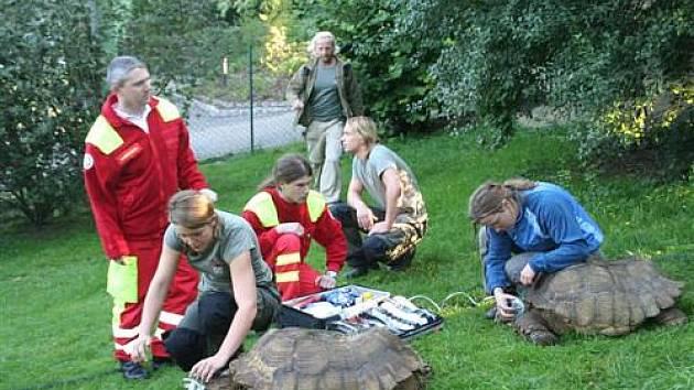 Želvy dostaly kyslík.