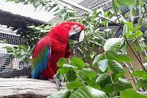 Mezinárodní den stromů v Zoo Dvorec - papoušek ara
