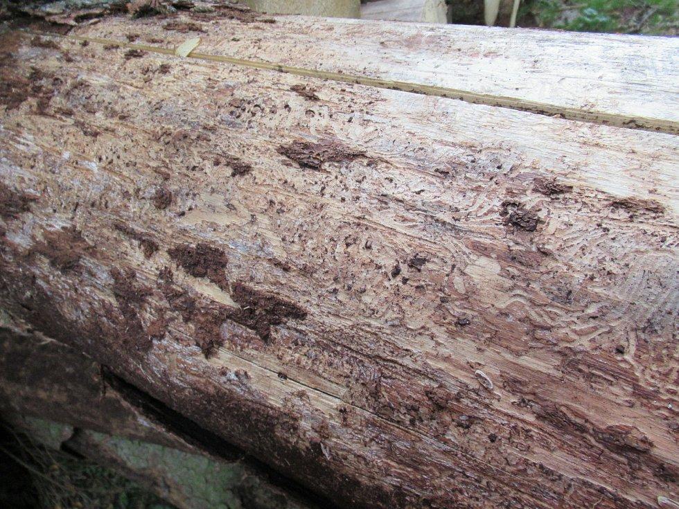 Nabídka kůrovcového dřeva převyšuje poptávku, což ovlivňuje i ceny smrkových sortimentů.