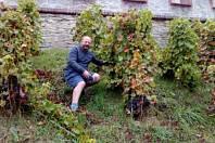 Lubor Dušek v Hluboké nad Vltavou pečuje o vinici.