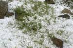 Kroupy v pondělí padaly také ve Veselí nad Lužnicí.