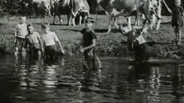 V jižních Čechách se natáčel film Dobrodružství na Zlaté zátoce. Místní kluci a místní skot si zahráli v dětském filmu Břetislava Pojara. Pro sourozence Štindlovi či Bohdalovi to byl nezapomenutelný zážitek.