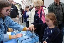 Rybí trh v Panské ulici v Českých Budějovicích.