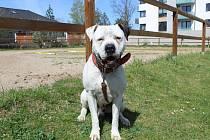 Karlo je sedmiletá argentinská doga. Je poslušný, komunikativní, bez průkazu původu. Je očkován, odčerven a načipován. Karlo byl odebrán původnímu majiteli kvůli  napadení procházejících osob. K napadení došlo v důsledku nezodpovědného chování majitele. N