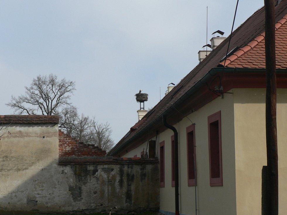 Čáp v Hluboké nad Vltavou, zámek Ohrada.