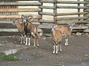 Historické snímky ze Zoo Ohrada.