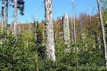Národní park Bavorský les. Ilustrační foto.